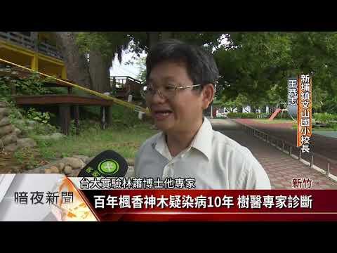 新埔文山國小百年楓香樹 染病手術治療【客家新聞20180825】 - YouTube
