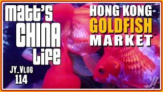 HONG KONG GOLDFISH MARKET width=