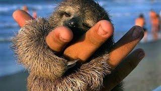 VIDEO. Top 10 cele mai mici animale