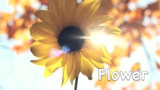 "Happy Acoustic Background Music ""Flower"" (FREE)"