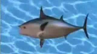 Sponge Bob Theme Song Backwards (Better Sound)