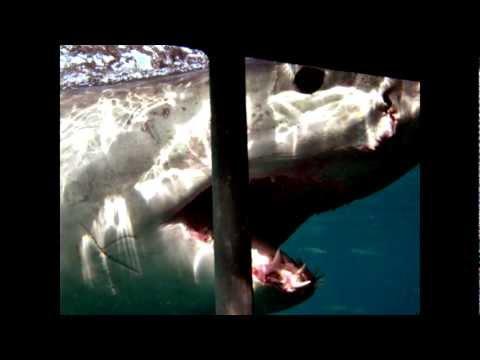 Great White Shark Cage Diving (South Africa) /// Büyük Beyaz Köpekbalığı Kafes Dalışı