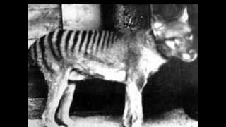 The undertaker and the Thylacine