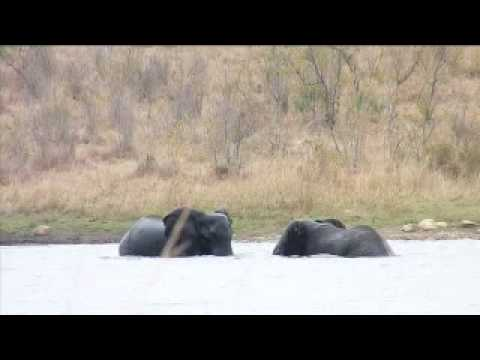 Elephants in Namibia and South Africa