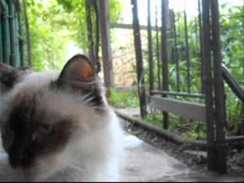 12.06.2011 Zaporizhzhya.Ukraine.wmv