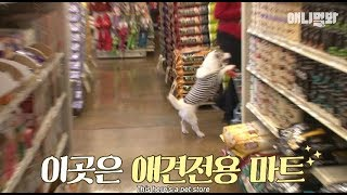 Wow.. I saw a dog pushing a cart at a supermarket...