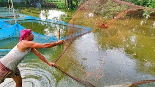 Best Cast Net Fishing | Village Fisherman Catching a Lots of Fish With Cast Net