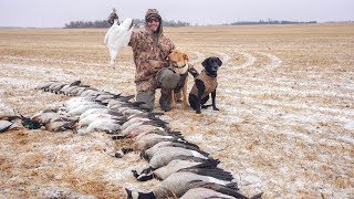 Goose Hunting Vulnerable Birds with 5 Different Species in The Snow!! (50 BIRD DAY)