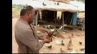 Special story on a bird lover in Guntur district