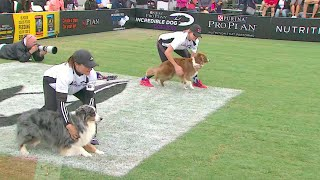 30 Weave Up & Back Competition - 2016 Purina® Pro Plan® Incredible Dog Challenge® Western Regionals