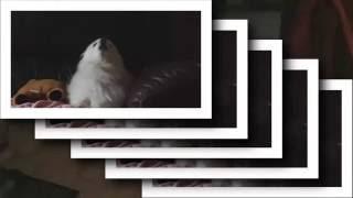 Gabe the dog MACINTOSH PLUS - リサフランク420 / 現代のコンピュー