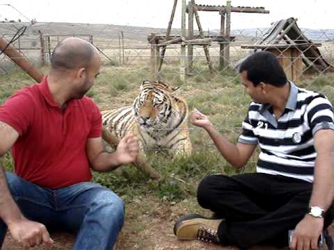 Tiger_M2.MPG