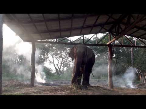 Nepal hāthī (हाथी)