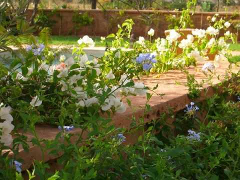 Bab Adrar D'Atlas Gardens and Terraces