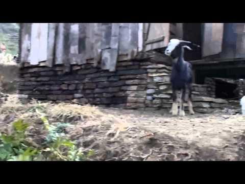 Annapurna Sanctuary: Jhinu – Pothana 02 (27-01-2012)