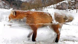 10 Dieren Gevonden in IJS Bevroren!
