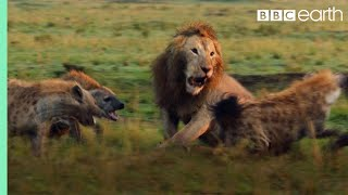 Lion Attacked by Pack of Hyenas - FULL CLIP (with ending) | Dynasties | BBC Earth width=