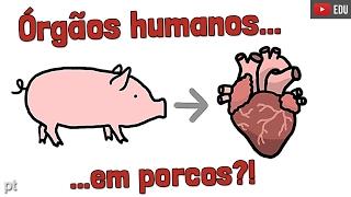 É correto criar órgãos humanos em porcos? | Minuto da Terra