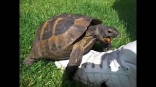 turtle having sex (ear rape)