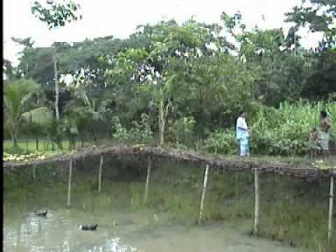 Village in Bangladesh