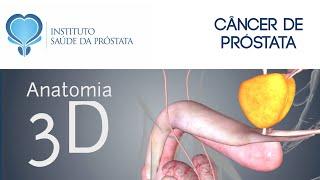 2- Qual a função da próstata? Entenda de forma fácil porque o câncer de próstata é um risco