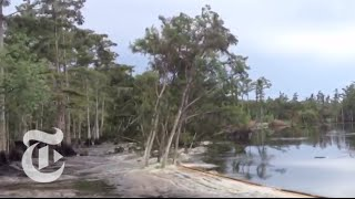 Sinkhole in Louisiana Swallows Trees - Caught on Tape 2013 | The New York Times