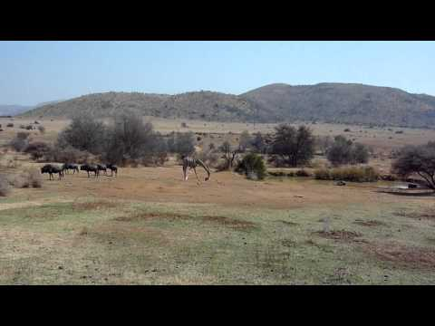 Pilanesberg NP Centre – South Africa (Sept. 2010)