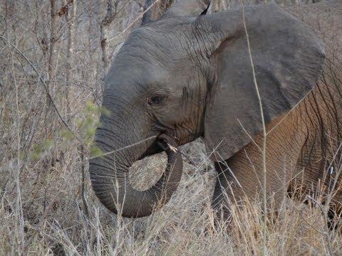 Safari 2011: First drive at Sabi Sands