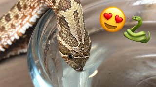 It's Adorable When A Snake Drinks Water!