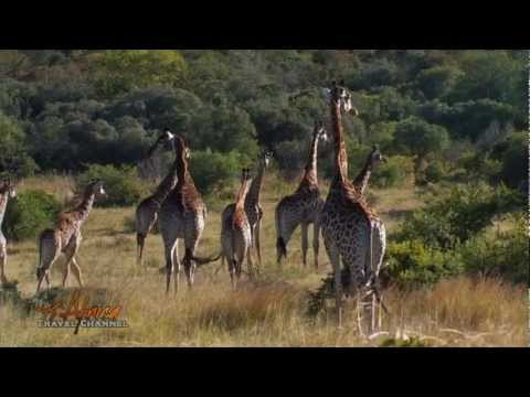 Leshiba Wilderness Wildlife Reserve Limpopo South Africa – Africa Travel Channel