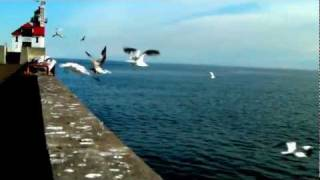 Seagulls by the seashore