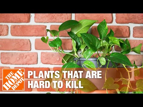 5 Easy Indoor Plants You Can't Kill