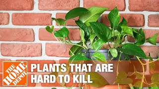 A video highlighting five houseplants that are easy to care for.