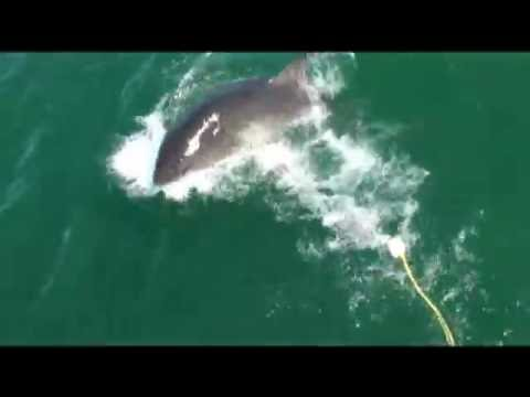South Africa Great Whites with Rec Diving
