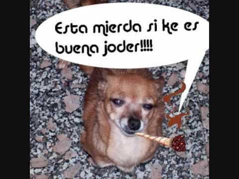 la perra los hispanos chords chordify