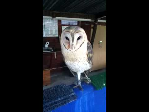 Makka Pakka, the Dancing Barn Owl