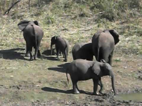NEH Teacher Field Study South Africa – Elephants