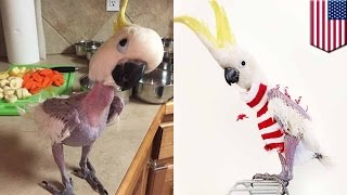 Animals wearing clothes: Featherless parrot in Kansas now en vogue with sweater game - TomoNews