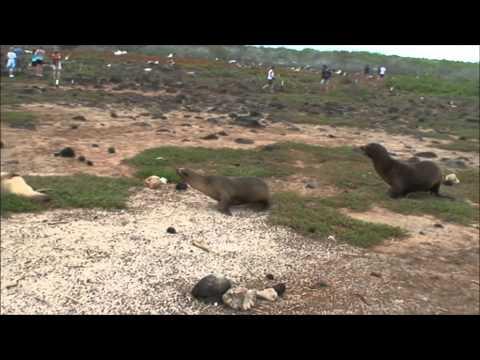 Ecuador – Insulele Galapagos – Eturia Romania