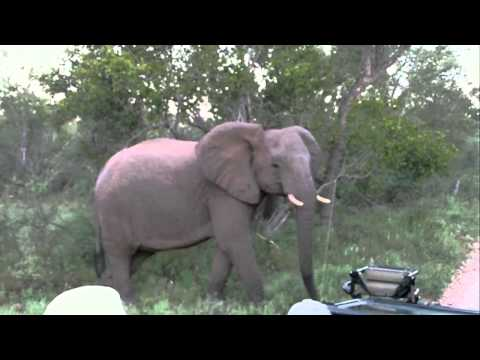 My South Africa Trip 2010