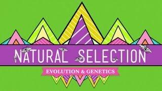 Natural Selection - Crash Course Biology #14