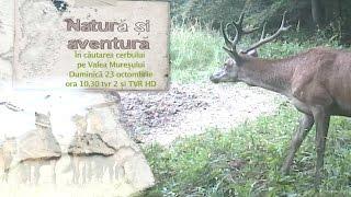 Observație de cerbi pe Valea Mureşului, în prima ediţie a noului sezon Natură şi aventură
