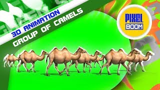 Green Screen Group of Camels in the Desert - PixelBoom 3D Animations