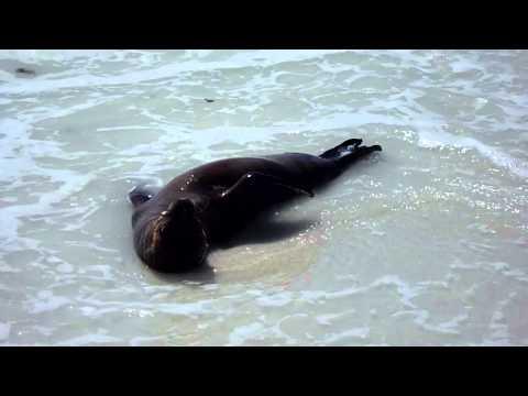 Ecuador Galapagos sea lion baby