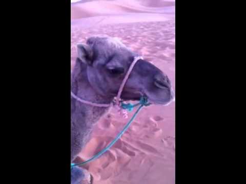 My Camel Mohammad Ali