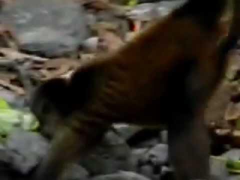 Monkeys – Nicaragua
