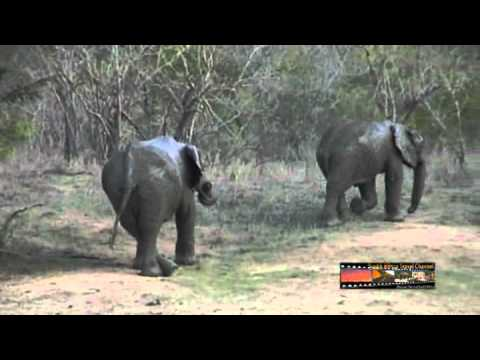 Elephant 04 – South Africa Travel Channel 24