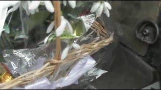 Hóvirág csempész