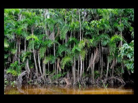 the ecuadorian rainforest