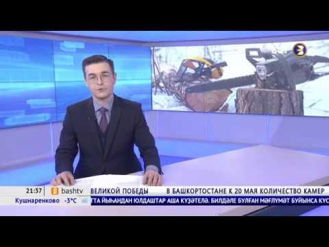 В Башкирии черные лесорубы в 2019 году нанесли ущерб в 129 млн рублей